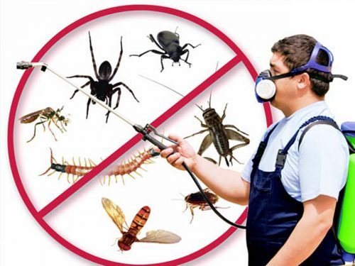 Pest Control Portland Or