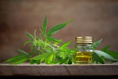 What is the essential of using cbd oil?