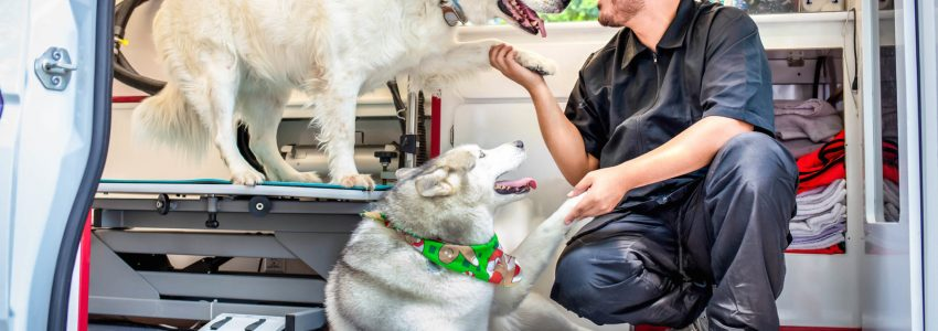 Mobile Dog Grooming Offers Some Privileges
