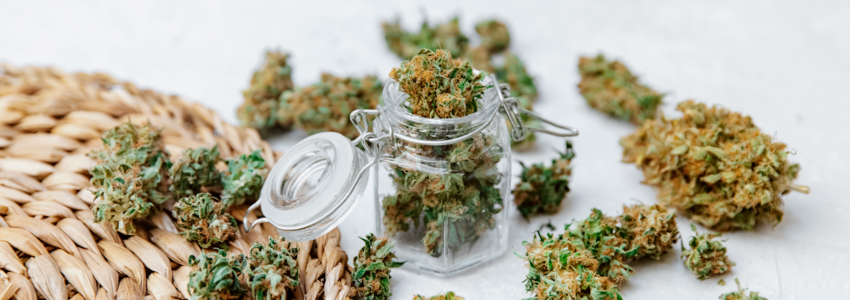 Cbd flowers – a potent therapeutic