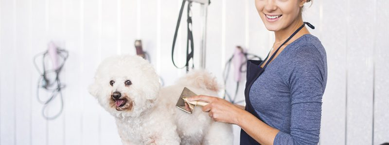 How to Find A Professional Dog Grooming services in Coral Springs