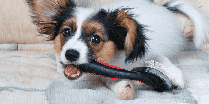 Best services are offered by the groomers so you can ensure to take care of your pets.